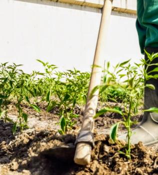 """Dona il tuo 5X1000 a """"campoAperto"""": una realtà agricola bio nell'area Nord di Napoli!"""