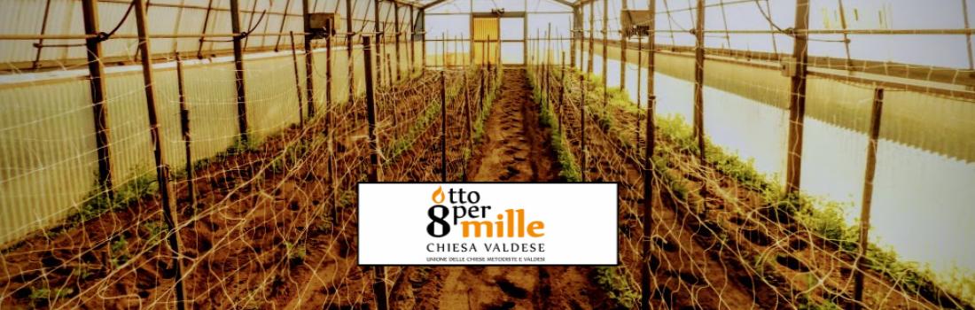 campoAperto: in carcere l'agricoltura continua grazie alla Chiesa Valdese
