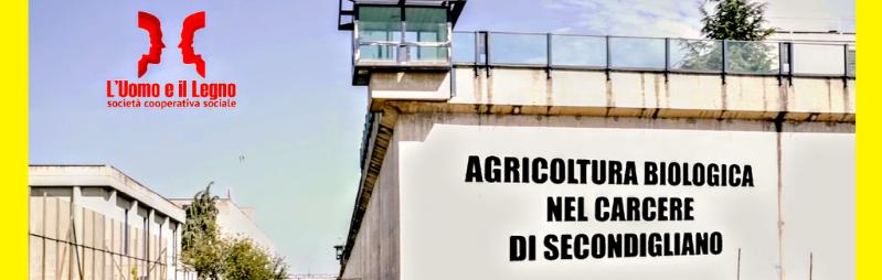 Basilico (al) Fresco: acquista una piantina e sostieni il progetto CampoAperto!